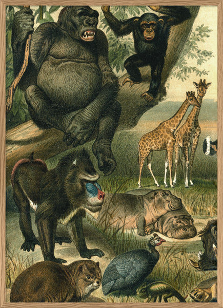 African Fauna. Left Side. No. 2910L