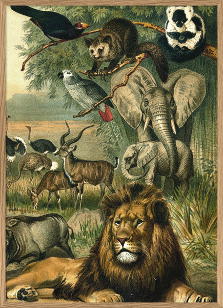 African Fauna. Right Side. No. 2910R