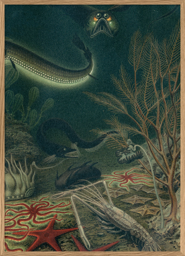 Deep Sea Fauna. Right Side. No. 2912R