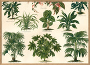 Oriental Plants Horizontal