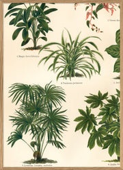 Oriental Plants Left Side