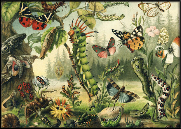 Larvae and butterflies Horizontal
