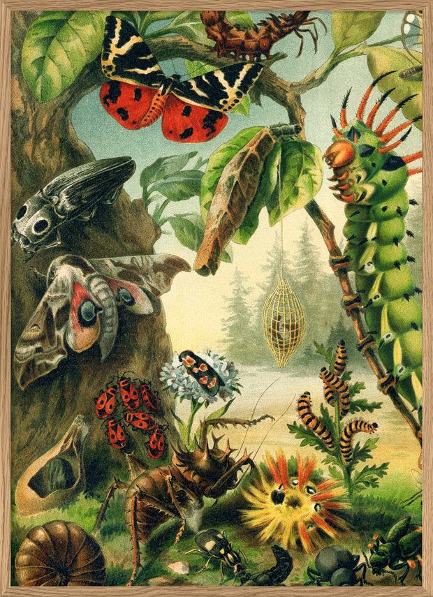 Larvae and butterflies. Left Side. No. 2931L