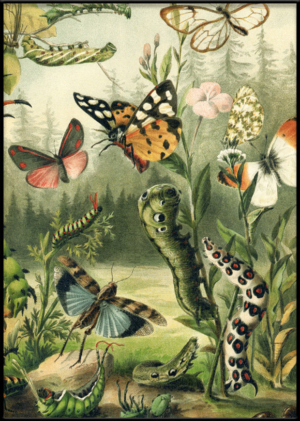 Larvae and butterflies Right Side