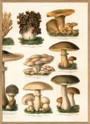 Mushrooms II. Right Side. No. 2932R