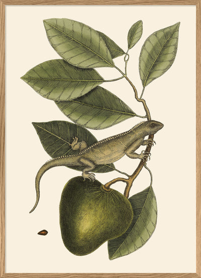 Lizard And Fruit Branch