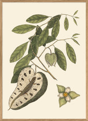 Lizard And Annona Fruit