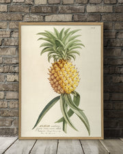ananas-plant-poster