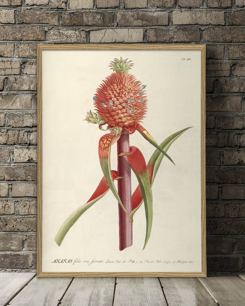 ananas-red-plant-poster