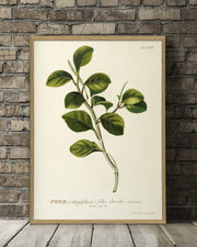 piper-plant-poster