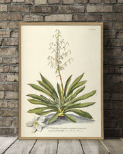 yucca-plant-poster