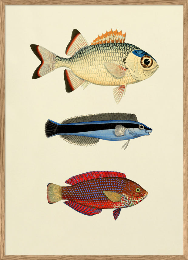 The Fishes. Print #3906P