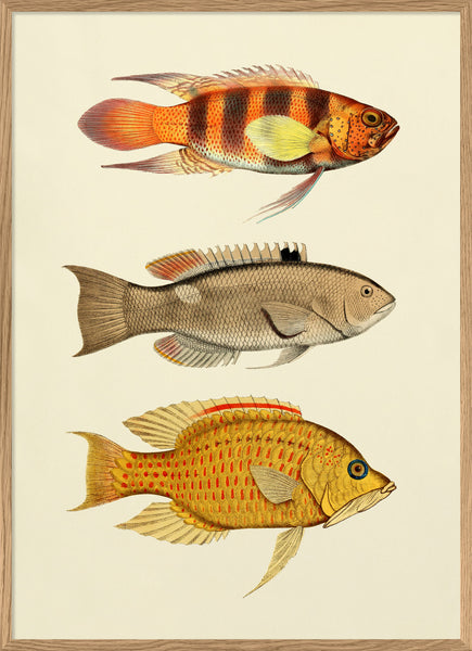 The Fishes. Print #3907P