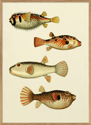 The Fishes. Print #3909P