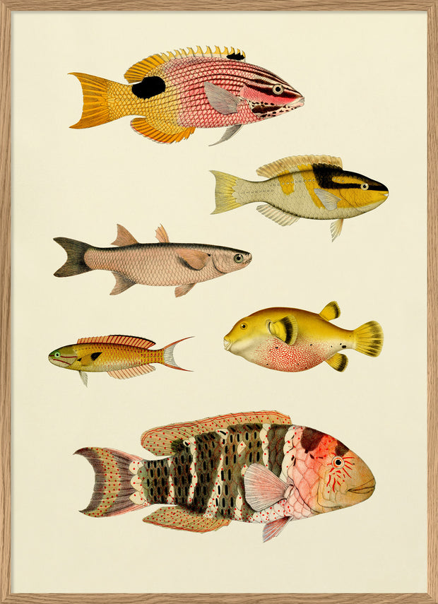 The Fishes. Print #3910P