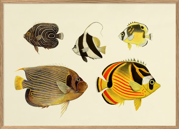 The Fishes. Print #3912H