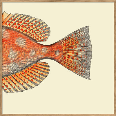 Dotted Orange Fish Tail