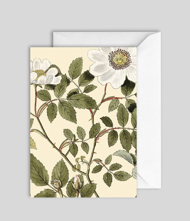 Plant Detail Card