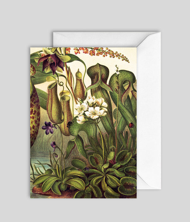 Water Plants Card