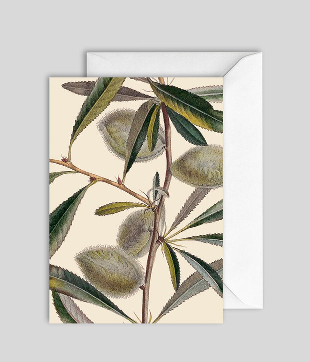 Almond Tree Card