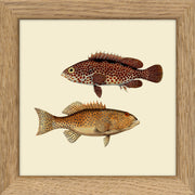 Fishes. Print #MS018