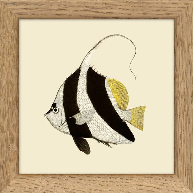 Fishes. Print #MS019