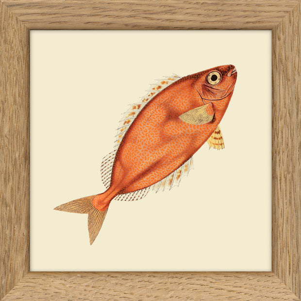 Fishes. Print #MS020