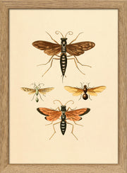 Insects. Print #RC001