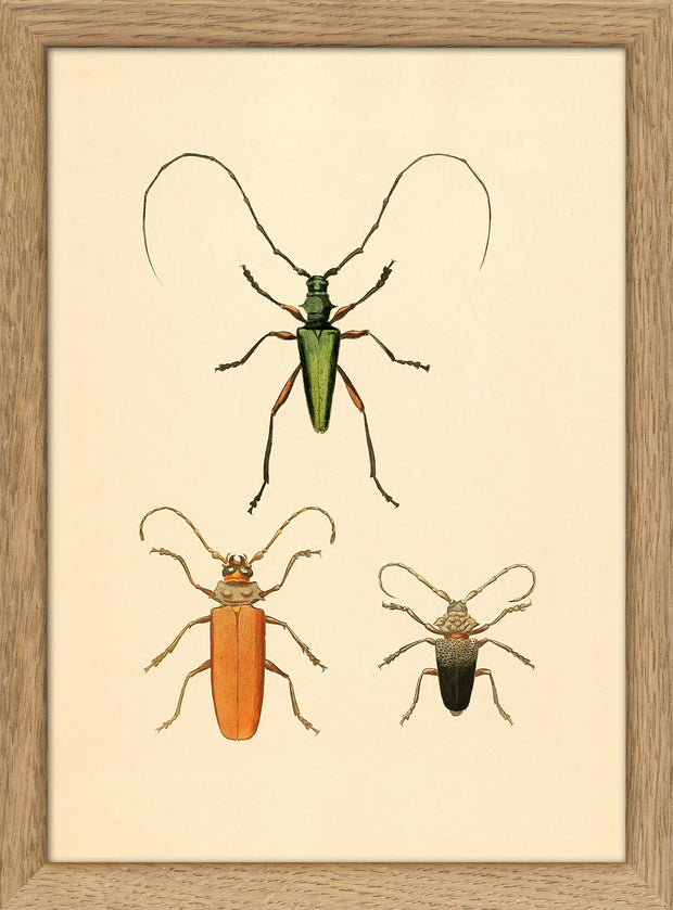 Insects. Print #RC003