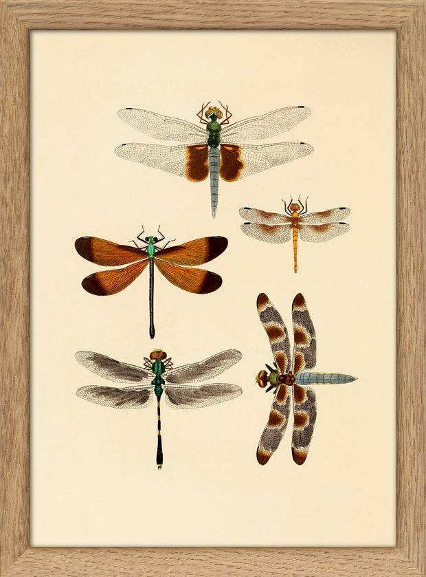 Insects. Print #RC004