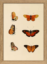 Insects. Print #RC007