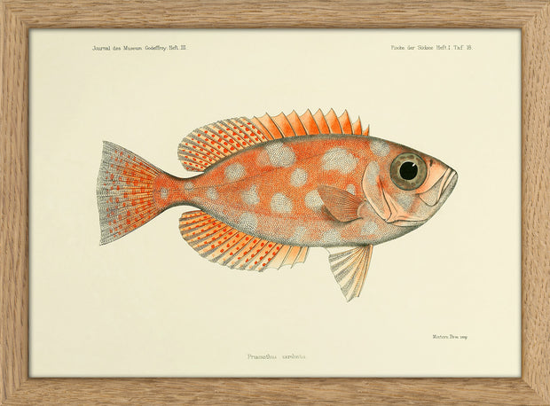 Fishes. Print #RC023