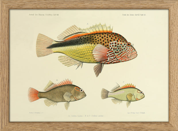 Fishes. Print #RC024