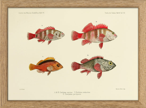Fishes. Print #RC027