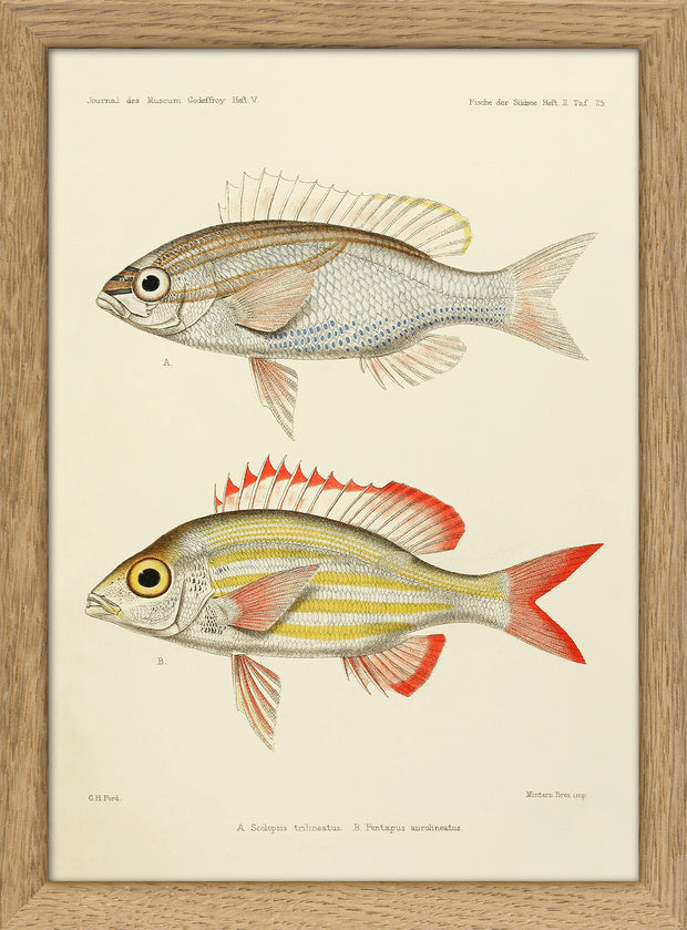 Fishes. Print #RC029