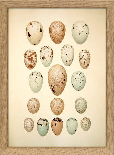 Eggs & Birds. Print #RC045