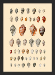 Sea Shells. Print #RC057