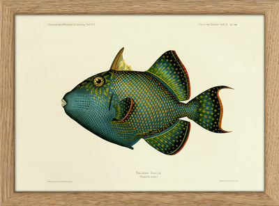 Fishes. Print #RC077