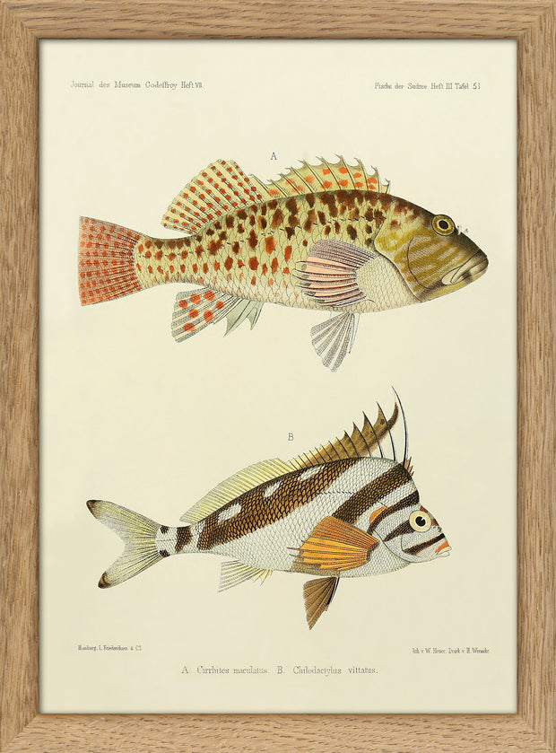 Fishes. Print #RC079