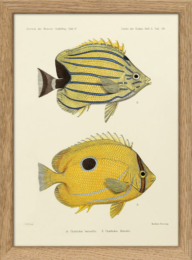 Fishes. Print #RC080