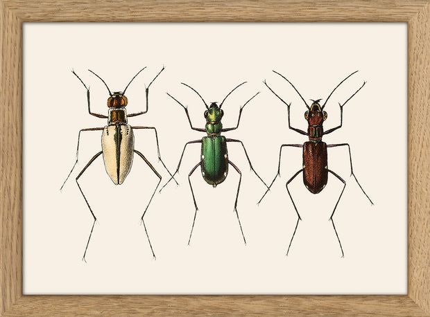 Insects. Print #RC137