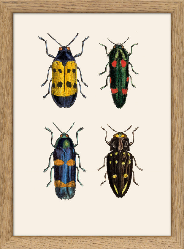 Insects. Print #RC139