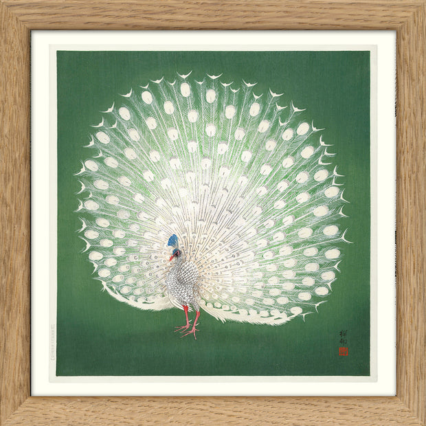 Peacock on Green. Print #SQ159