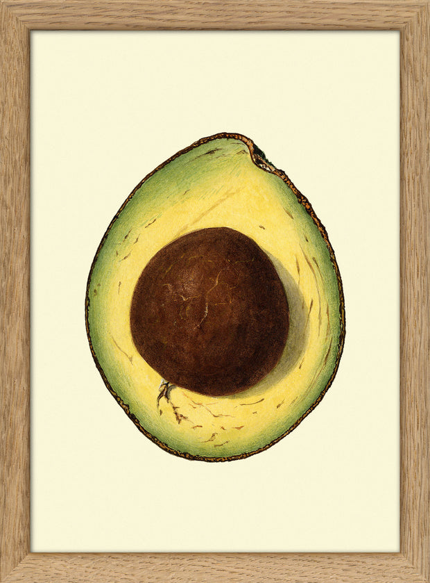 Avocado mini open