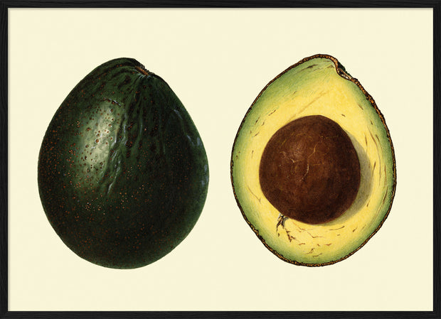 Avocado open and closed