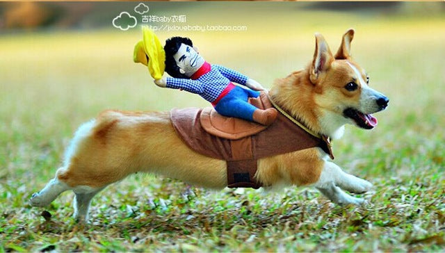 Ride em cowboy !! This costume is just amazing ! - AllProDog