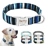Nylon dog collar with a personalized engraved nameplate