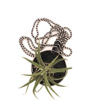 Load image into Gallery viewer, Air Plant Necklace