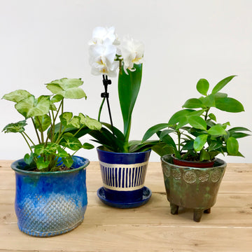 Three Planters Workshop (17 & 24 October)