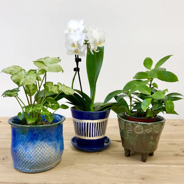 Three Planters Workshop (10 & 17 January)